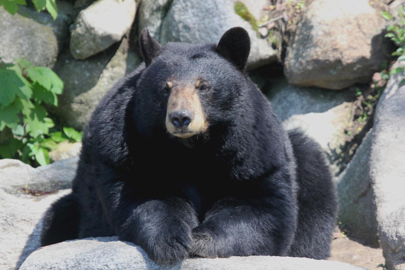 AZA Grants Accreditation to the Buttonwood Park Zoo