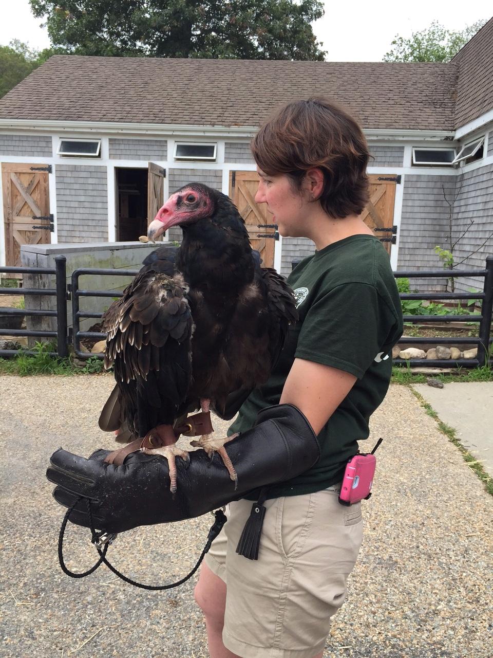 International Vulture Awareness Day @ Buttonwood Park Zoo | New Bedford | Massachusetts | United States
