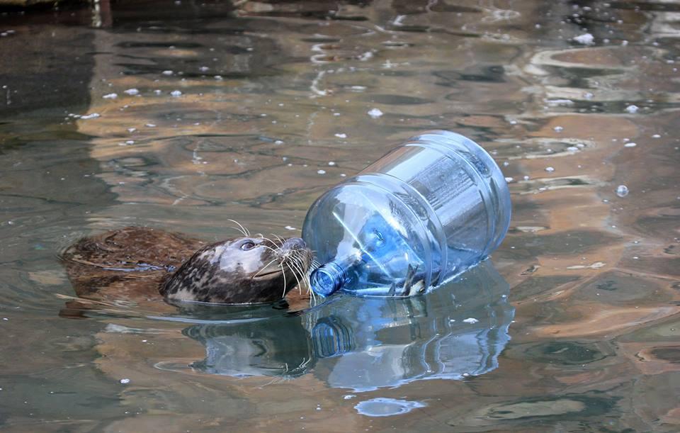 It's not litter, it's enrichment