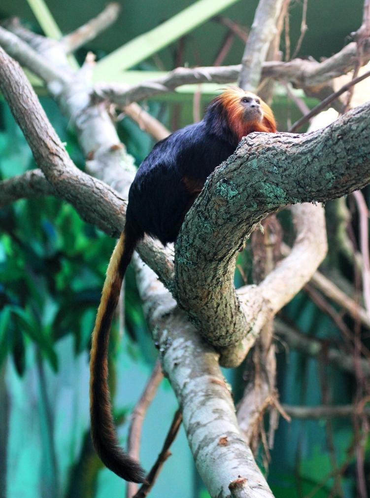Buttonwood Park Zoo achieves fourth consecutive AZA accreditation