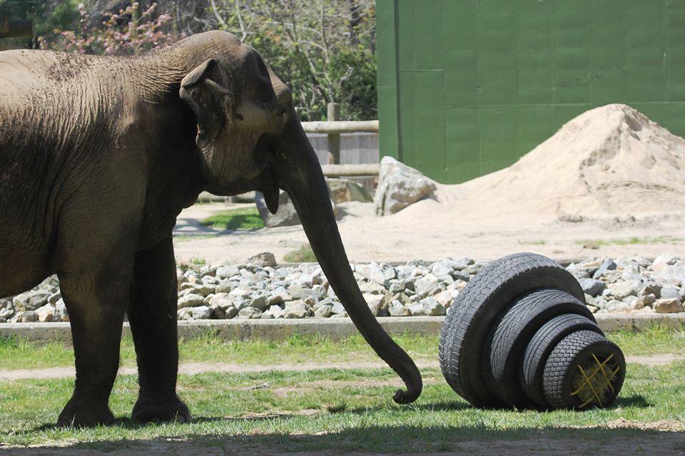 Toys for Elephants