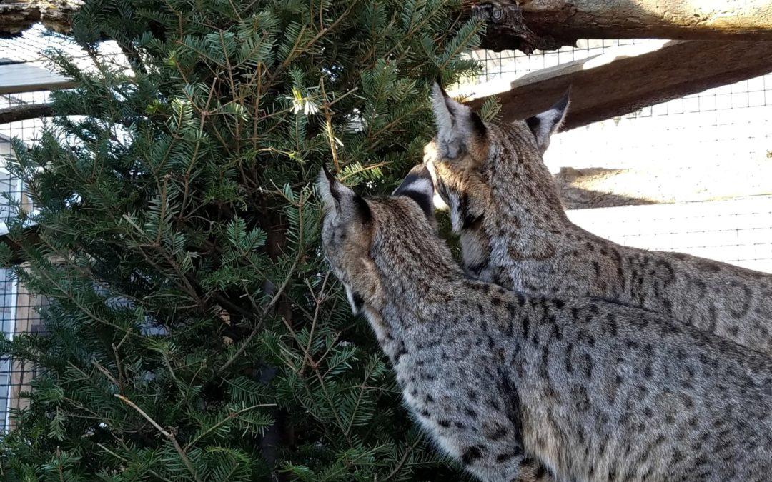 Local Companies Donate Christmas Trees to Zoo Animals