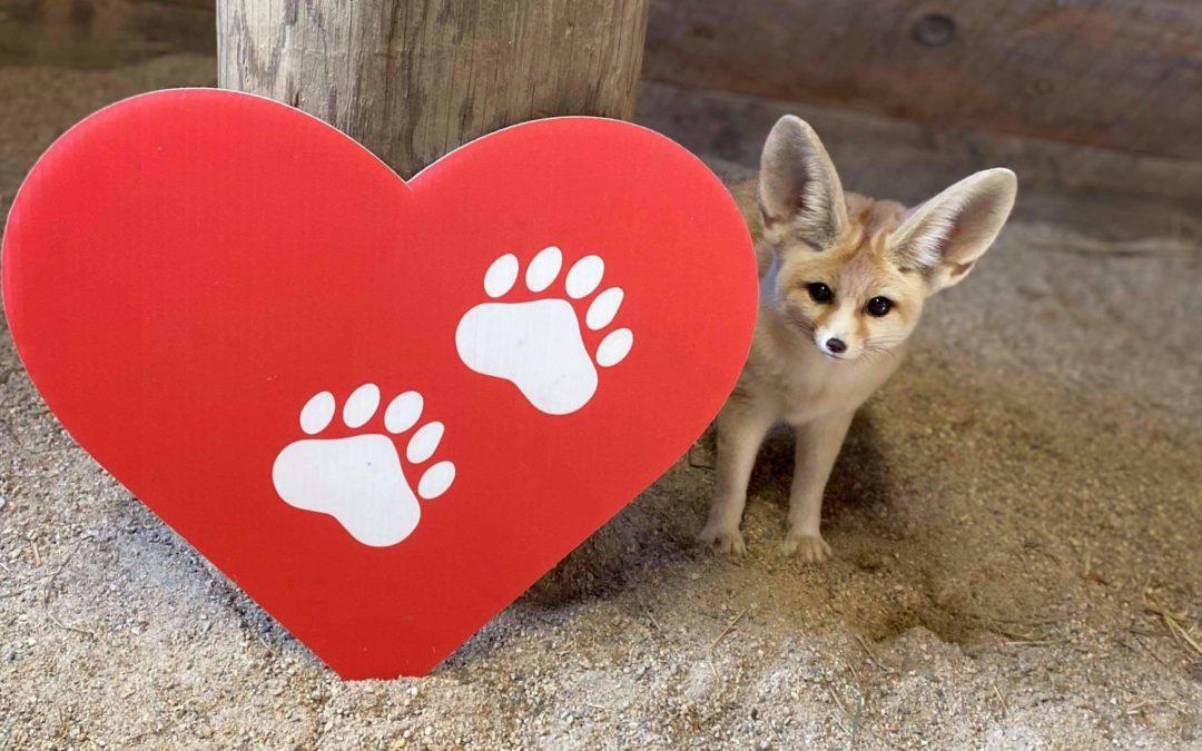 Share the Love Fundraiser