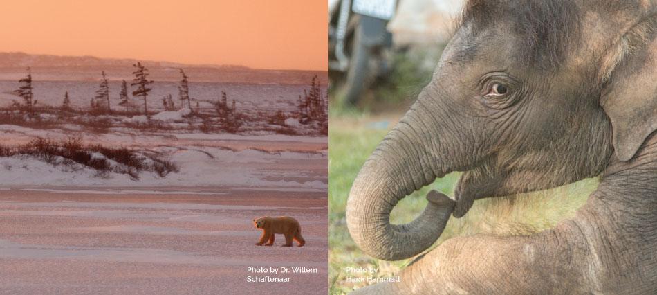 Wildlife Education Series Returns